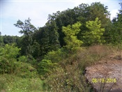 14.52 +/- ac. Welton Orchard Rd, Petersburg, WV